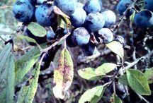 nature photos/my photos