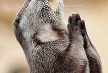 Spiritual animals