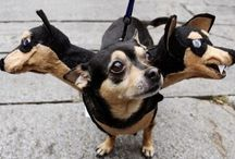 Pet Costumes for Halloween from Dioptics