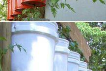 tamato growing tips