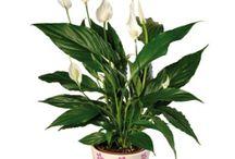 inne planter