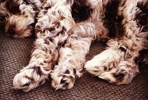Puppies! / by Desireé Bennett