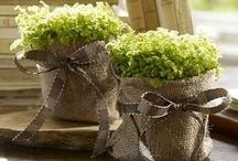 bylinky a nádoby