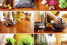 Terrariums/mini gardens/fairy gardens! / by Starlyn Busby