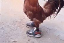 Kurczak