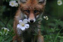 fox love / by Ozgun Sonmez