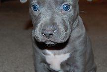 Future fur babies / Puppies