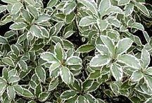Plantas para climas continentales