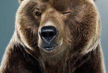 Bears / by Libby Ballard