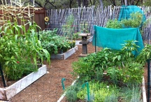 Garden's Harvest / Gardens that nourish the soul as well as the body. / by Carla Jean