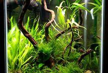 i style aquascape