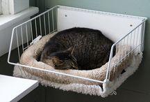 Case pentru pisici