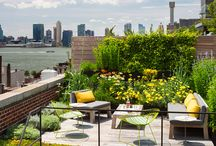 Roof top/green roofs