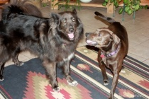 The Girls / Kody, Lucy and Furry Friends / by Jo-Ann Stafford