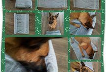 Hondenspellen