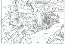 beautiful birds coloring pages
