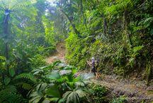 Trekking de Ciudad Perdida (Colombia) / Es uno de esos trekking míticos, en los que se combina lo remoto de las ruinas, con el misterio que las rodea. La Sierra Nevada de Santa Marta se levanta a más de siete mil metros sobre el Caribe y este es el lugar donde se sitúa la Ciudad Perdida de los Tayrona.  Naturaleza, contacto con las comunidades indígenas y pura aventura en esta ruta que es uno de los hitos imprescindibles de cualquier viajero. Este año montamos salidas de grupo en agosto, septiembre y octubre. No os lo perdáis!