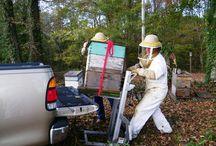 Μελισσοκόμικά είδη