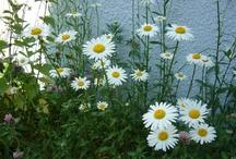 Natur / Nature, garden, harvest