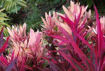 Plant / by Elizabeth Przygoda-Montgomery