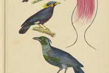 Birds/Animals/Foliage