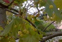 Blüten trees ans shrubs