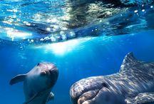 My Dolphin Friends