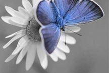 PHOTOS Tout en Gris avec une touche de Bleu