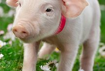 What's your name PIG? / by Carolyn Murray