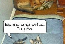 Animais ❤