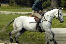 Training Videos / Hunter/jumper, dressage and eventing training videos from Practical Horseman magazine
