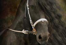 Konie / Konie