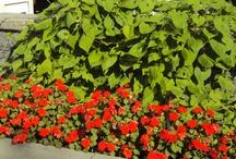 Gardening & Landscape Ideas