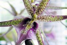 Orchids etc.