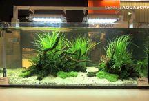 Aquarium Ideas / Ideas for creating nice and original Aquariums