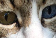 Kedi'ler