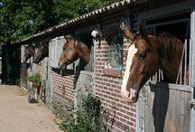 vakantie paard