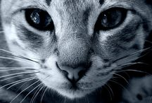 Here kitty, kitty, kitty / by Billie Anderson Rauser