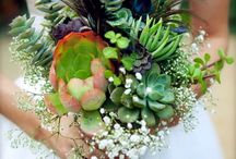 Succulent Peacocks / by Revel Events