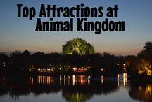 Animal Kingdom at Walt Disney World / FInd the best tips for going to Animal Kingdom at Walt Disney World.