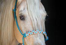 Výbava pro koně