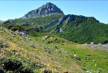 Wildflowers in the Picos de Europa