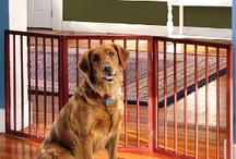 Dog Doors Gates & Ramps