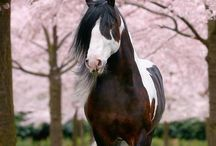 Horses / I've always wanted a horse my entire life and I hope to own one or two sometime in my lifetime <3