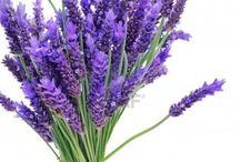 Kvety ;) / Príroda