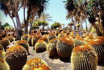 #Cactus / Dans la vie, il y a des cactus