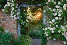 New rose garden ideas
