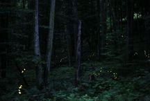 lucciole-glow-worm