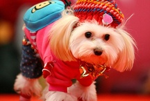 Doggy Style!  / #dogfashion #dogclothes #dogcostumes #dogapparel  / by Pawed