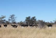 beautiful motherland / Botswana.... my pride and joy